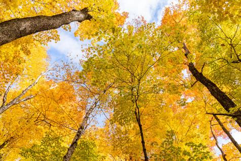 foliage wow (1 of 1).jpg