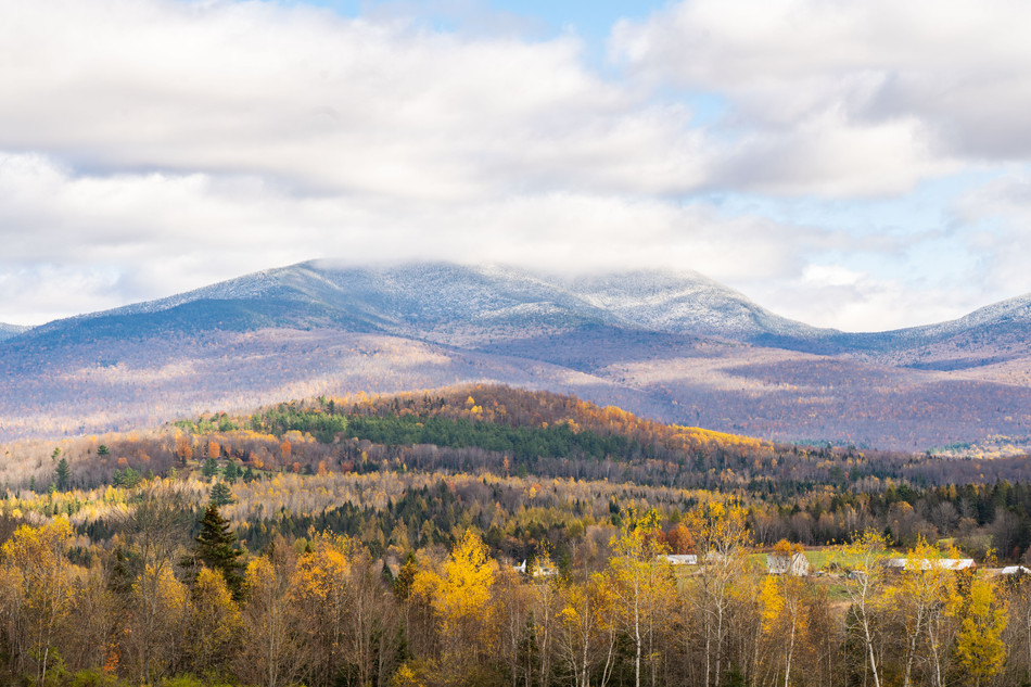 Snowliage below Mount Cabot, White Mountains, NH