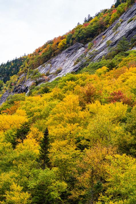 willard trees (1 of 1).jpg