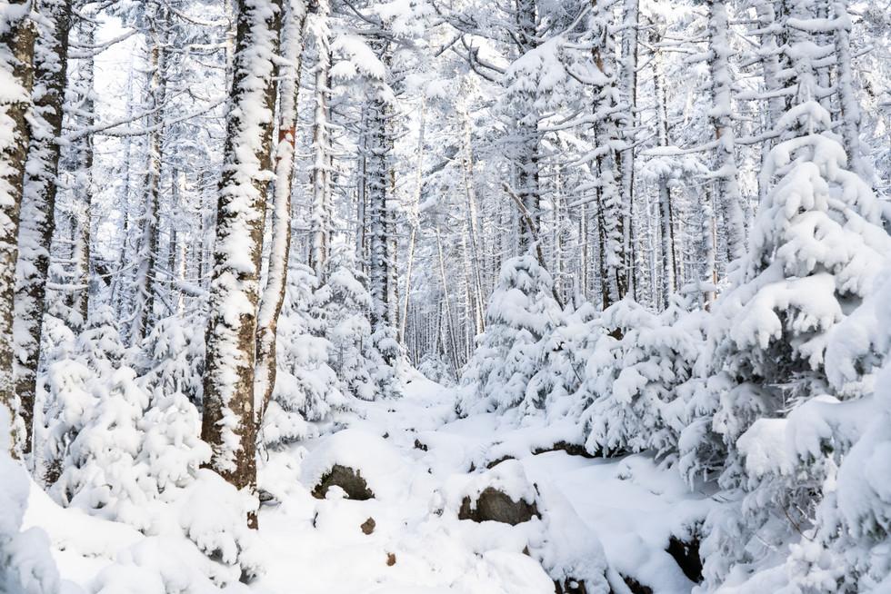 A Snowy Crawford Path, White Mountains, NH