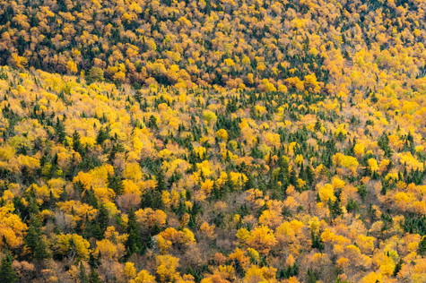 pines and birches updated (1 of 1).jpg