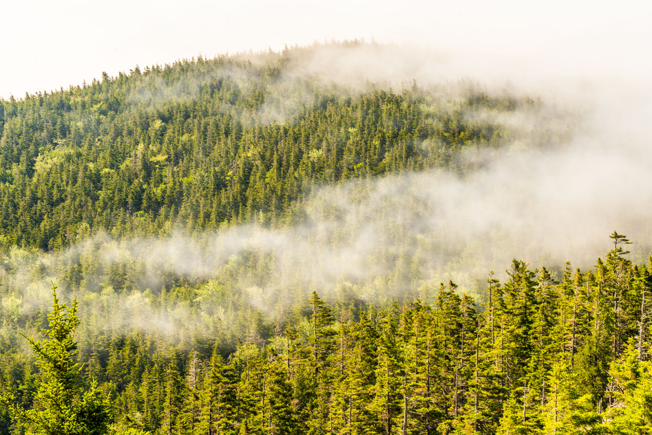 In the Clouds on Mount Pemetic, Acadia National Park, ME