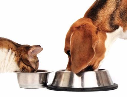 Питание в гостинице для животных