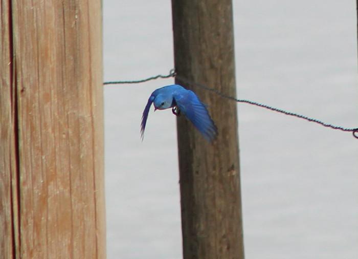 True Blue Overture