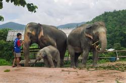 Rescued elephant family