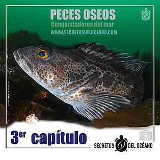 ANUNCIO PECES OSEOS 1.jpg
