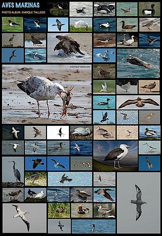 Aves marinas-filtered.jpeg