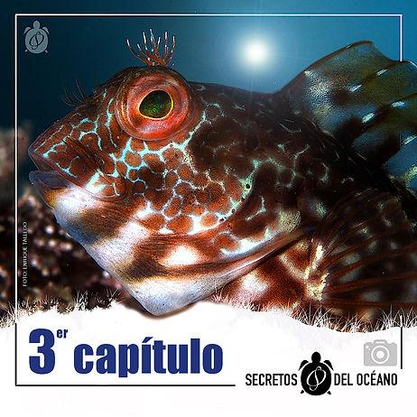 peces_óseos.jpg
