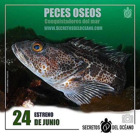 ANUNCIO PECES OSEOS 3.jpg