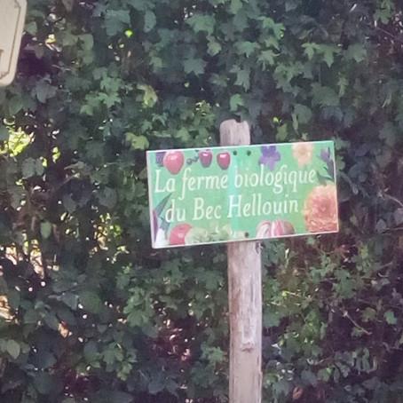 Gelebte Permakultur - im August haben wir die Ferme du Bec Hellouin in Frankreich besucht