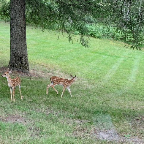 Visitors to Our Park