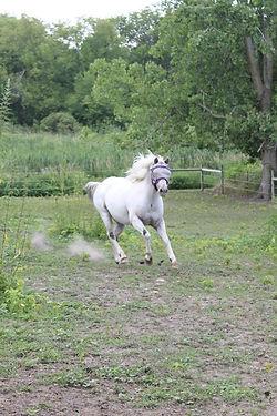Marshmellow The Wonder Pony