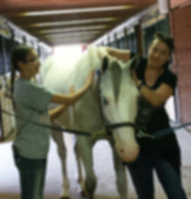 Barbara and rachael grooming Maybelene one of our therapy horses