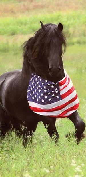Veteran Horse Tribute