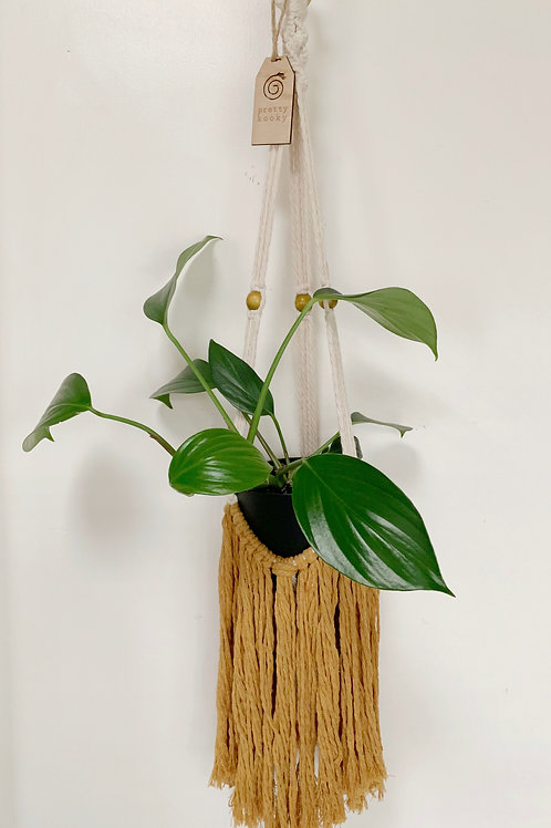 'Tassel Me Magic' Mustard Plant Hanger