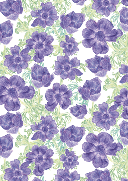 anemone floral detail