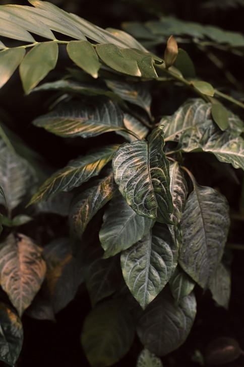 Plener-slubny-w-ogrodzie-botanicznym-UW-