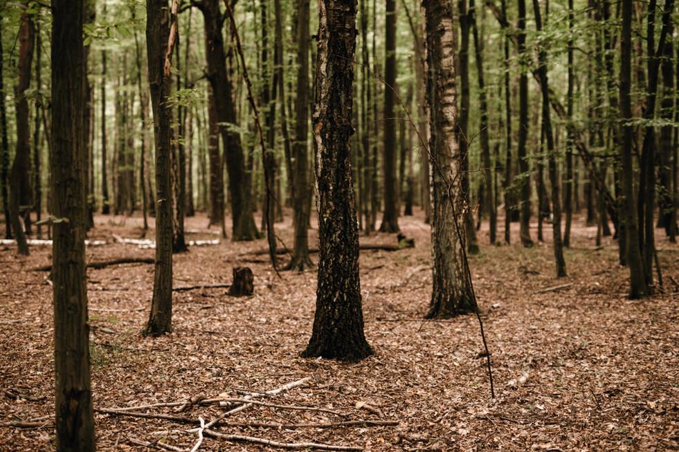 Plenerowa-sesja-slubna-w-lesie-Kabackim-
