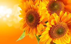 Juliana sunflower oil