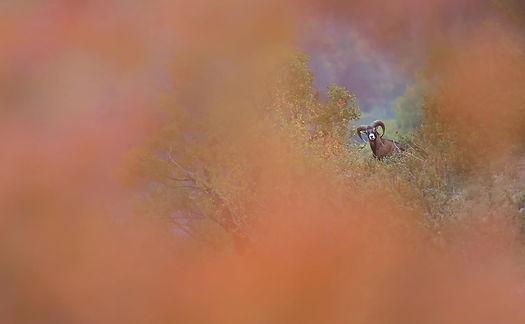 Photographier la faune sauvage - copy. Romain Monlong