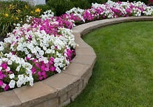 bigstock-Pink-And-White-Petunias-4990306