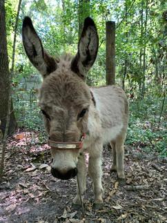 donkey2.jpeg