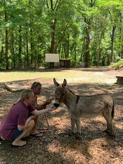 donkey1.jpeg