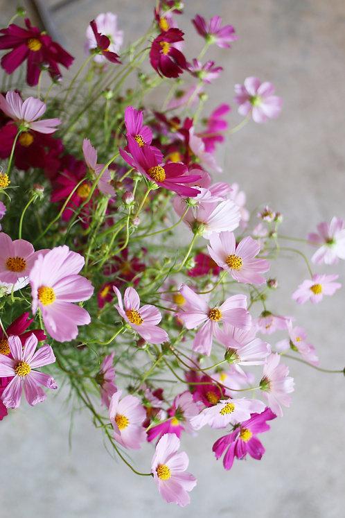 お花を飾ろう 季節の花セット