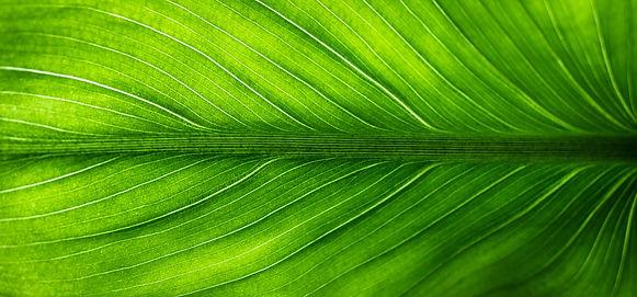 leaf-2210973.jpg