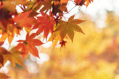 red-and-orange-maple-leaves-in-autumn-kyoto-japan-royalty-free-image-1600875178.jpg