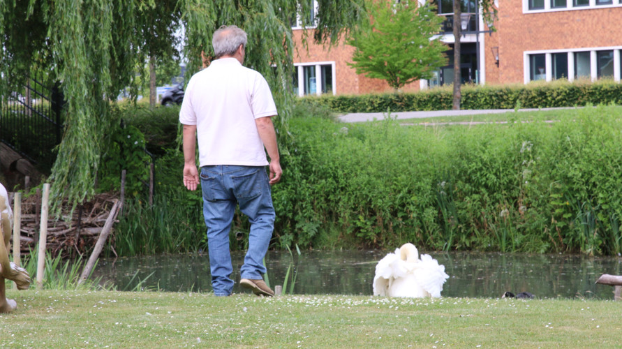 Chris and the swan