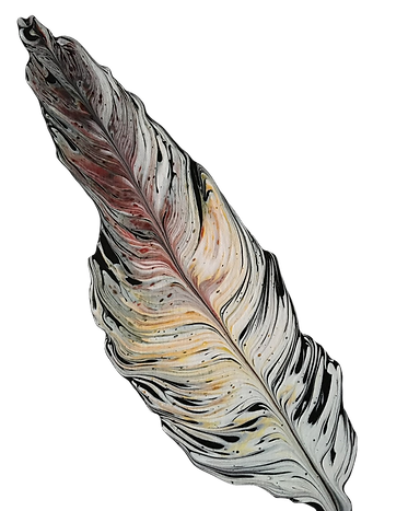 feather2_edited_edited.png