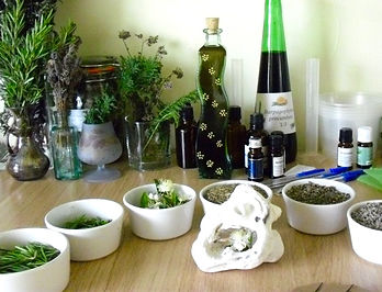 Herbs of Breath and Bone. A workshop at Avalon Herbal Medicine