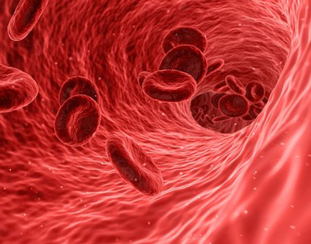 Herbs for reducing blood clotting