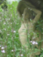 Avalon Herbal Medicine, Mary Bruce Medical Herbalist, herbalistmary, Mary Bruce, Herbs