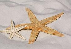 starfish-343791__340_edited.jpg