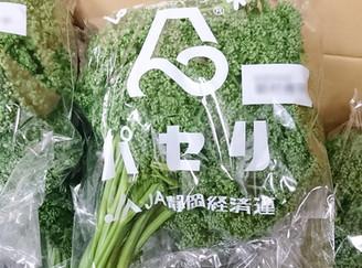 パセリ(静岡県)