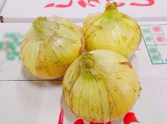 玉葱(佐賀県)