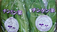 チンゲン菜(茨城県)