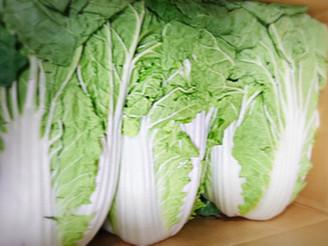 白菜(長野県)