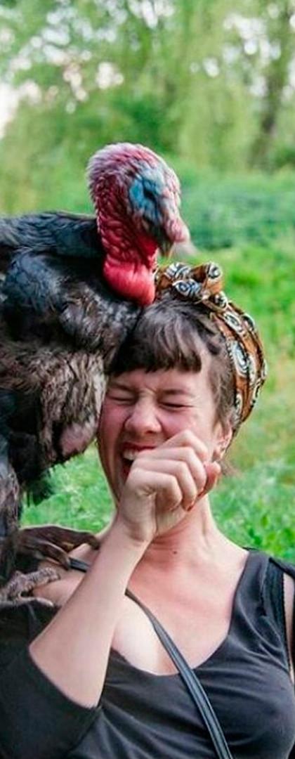 Darle de comer a los animales