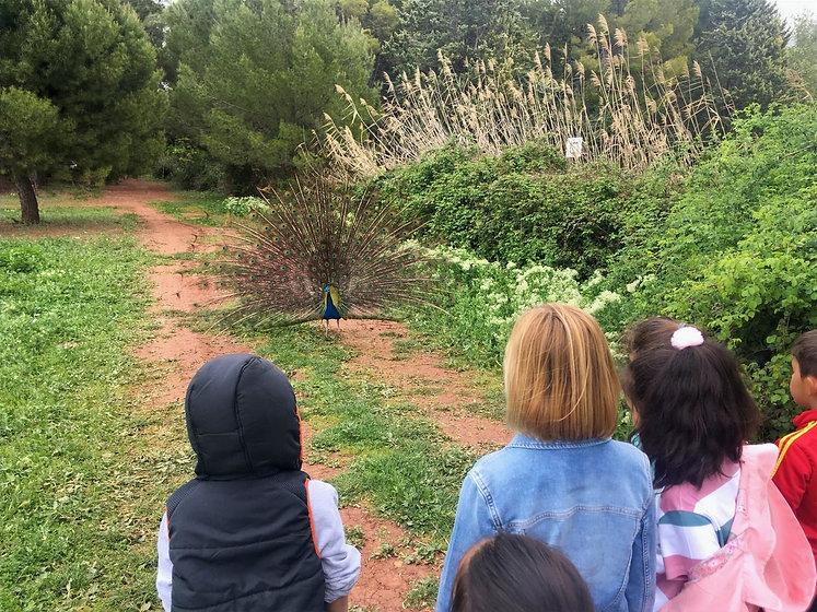 Campamentos de verano de la Granja escuela Atalaya de Alcaraz en Albacete. Casa rural, albergue, cursos de monitor y actividades en la naturaleza