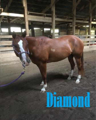 Diamond Headshot.jpg