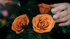 Local Florist | Content Creation