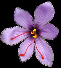 62_saffron.png