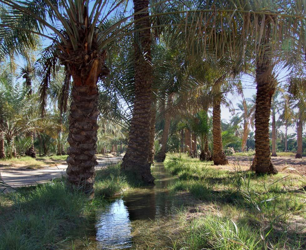 DWP plantation 1