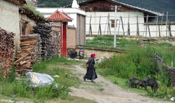 Ringha farm 2