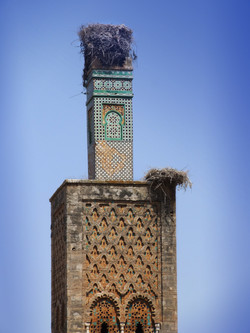 maroc nest