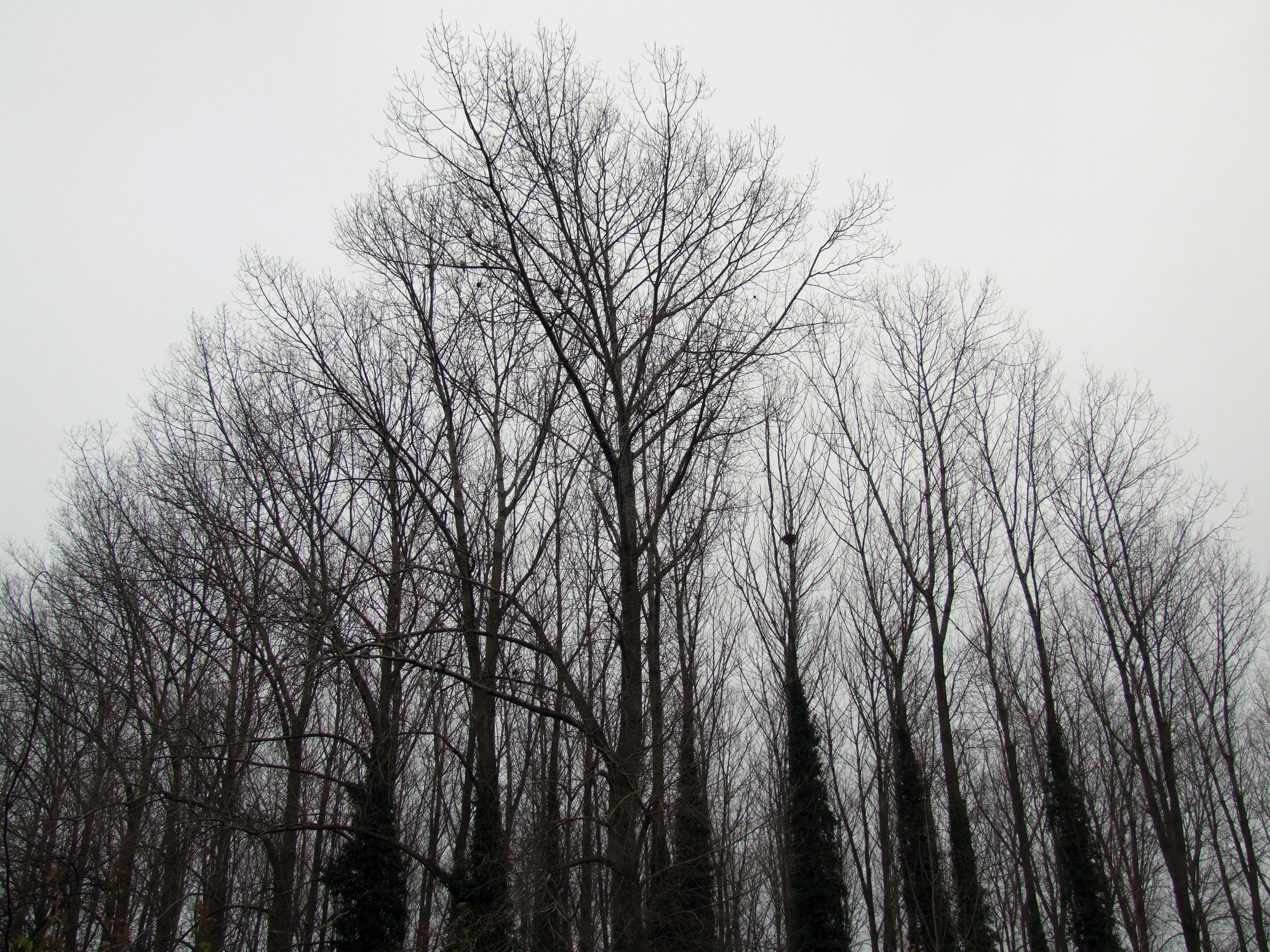 voogdij bomen