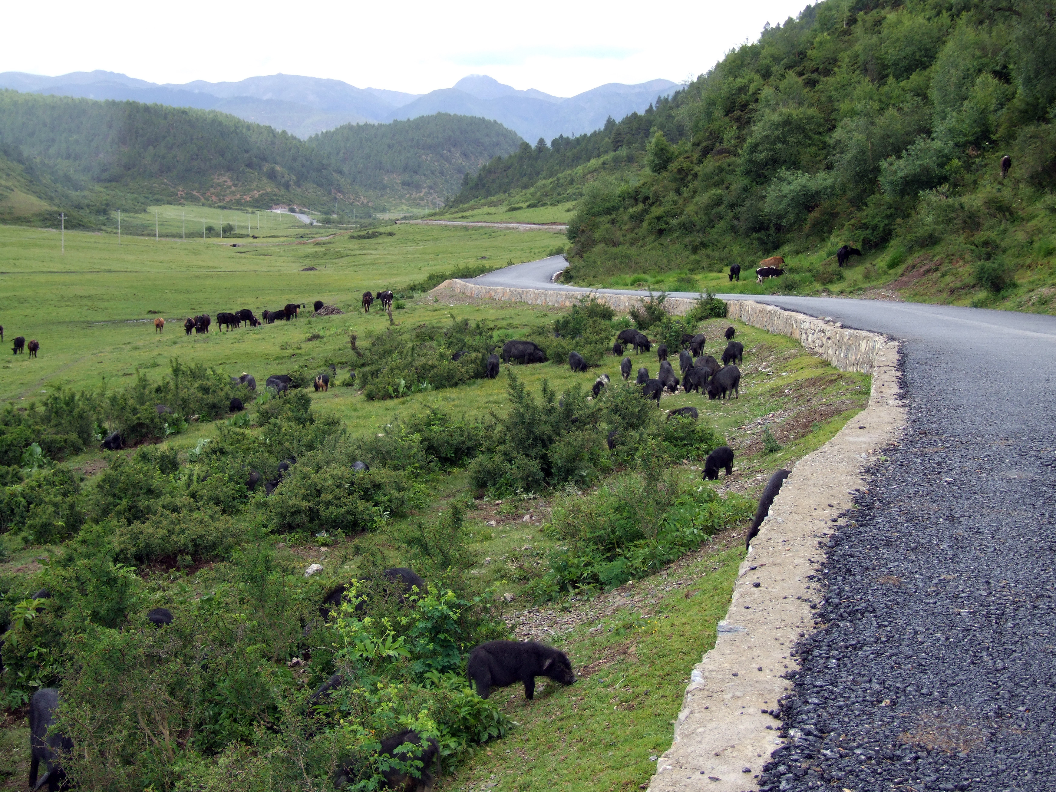 ringha valley animals